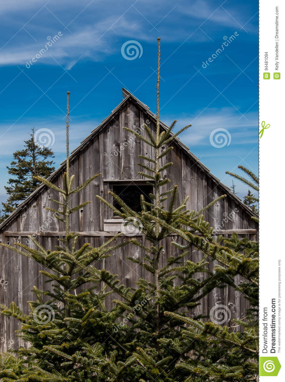 Two Small Pine Trees Grow Near Weathered Cabin Stock Photo Image