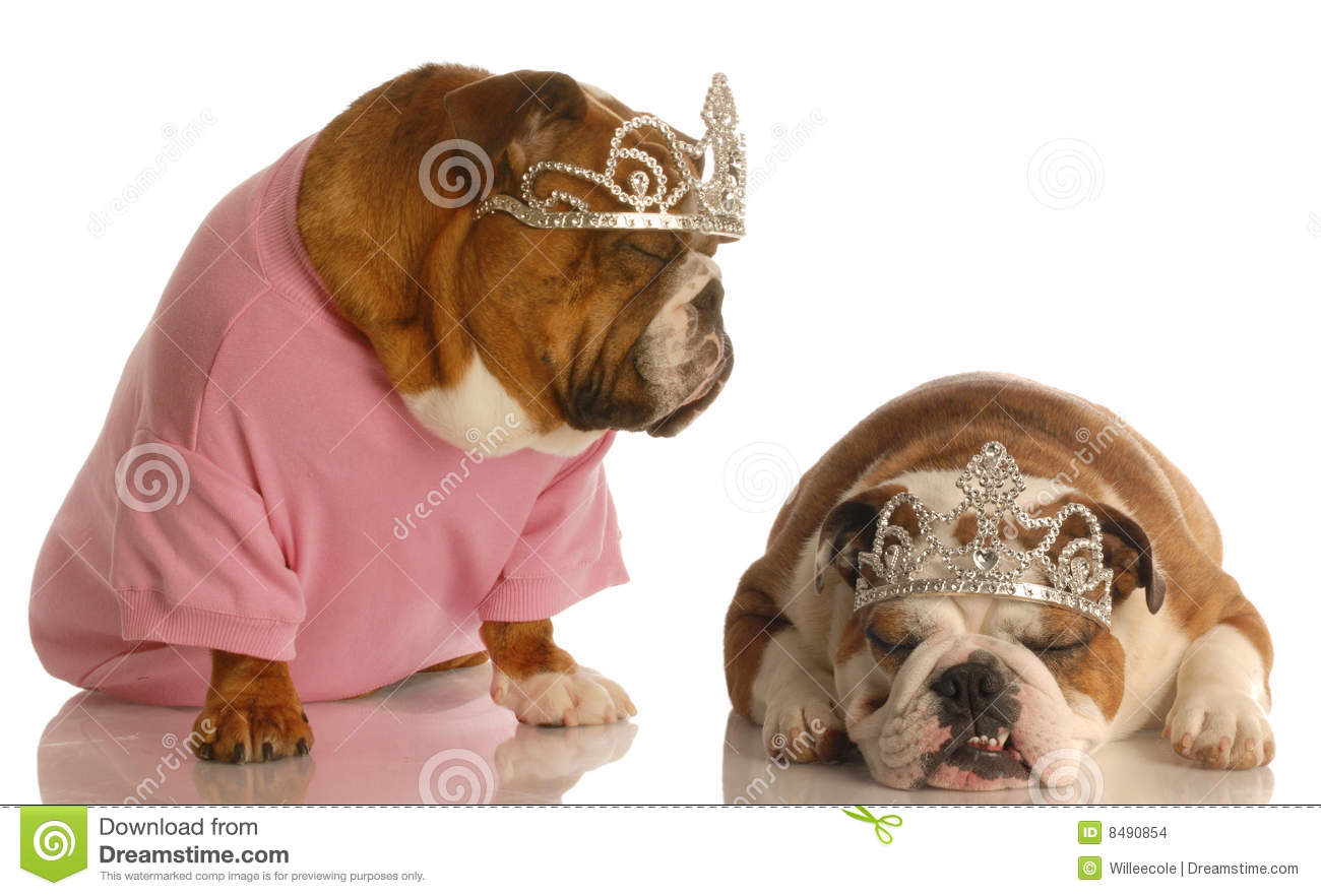 Two Spoiled Dogs Stock Photo. Image Of Halloween, Face