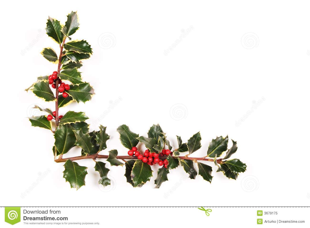 Two Sprigs Of Holly Stock Image Image Of Season