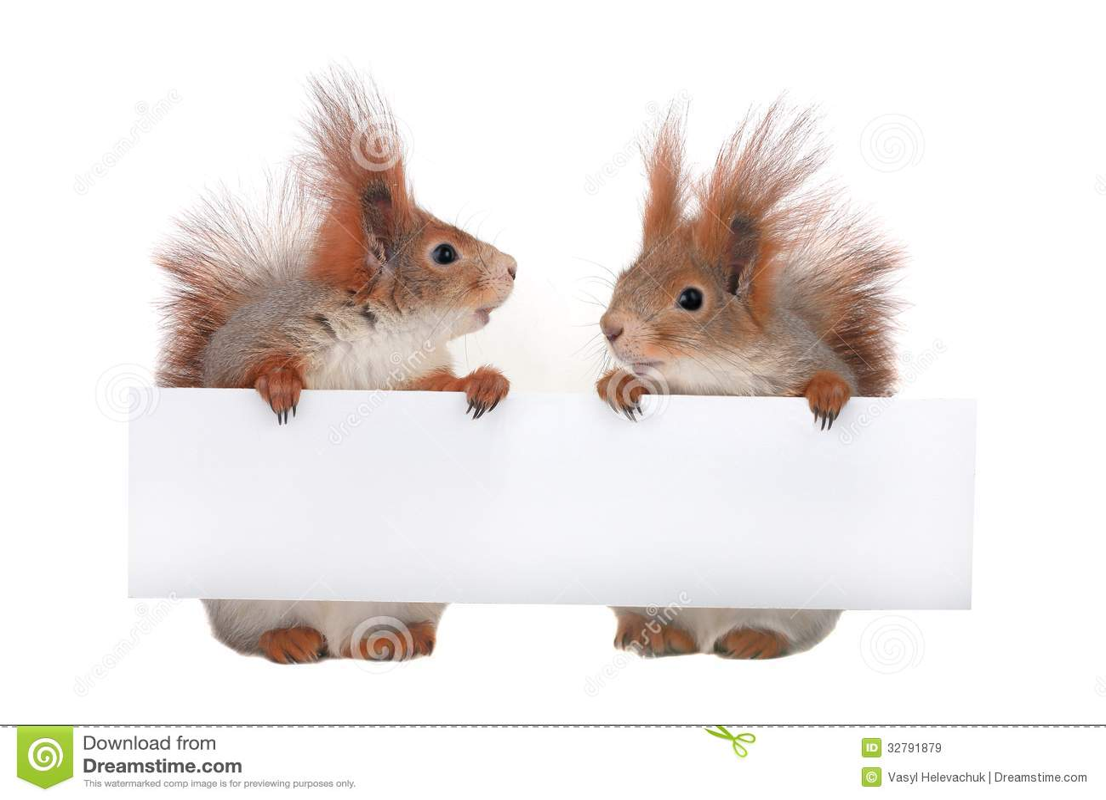 squirrel monkey written essay