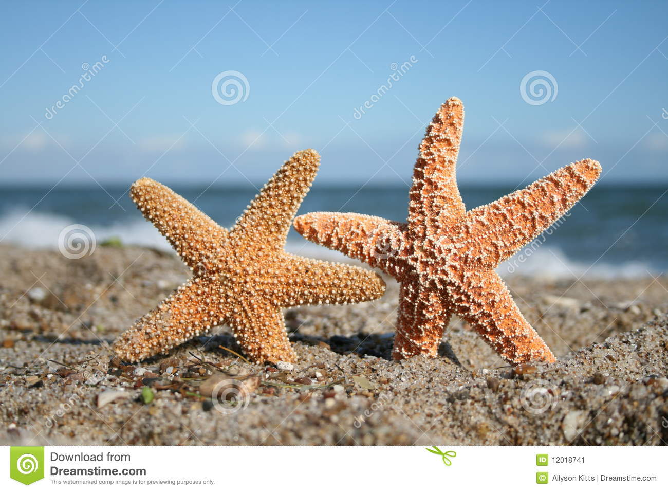 Two Starfish On Beach Stock Image Image Of Lovers