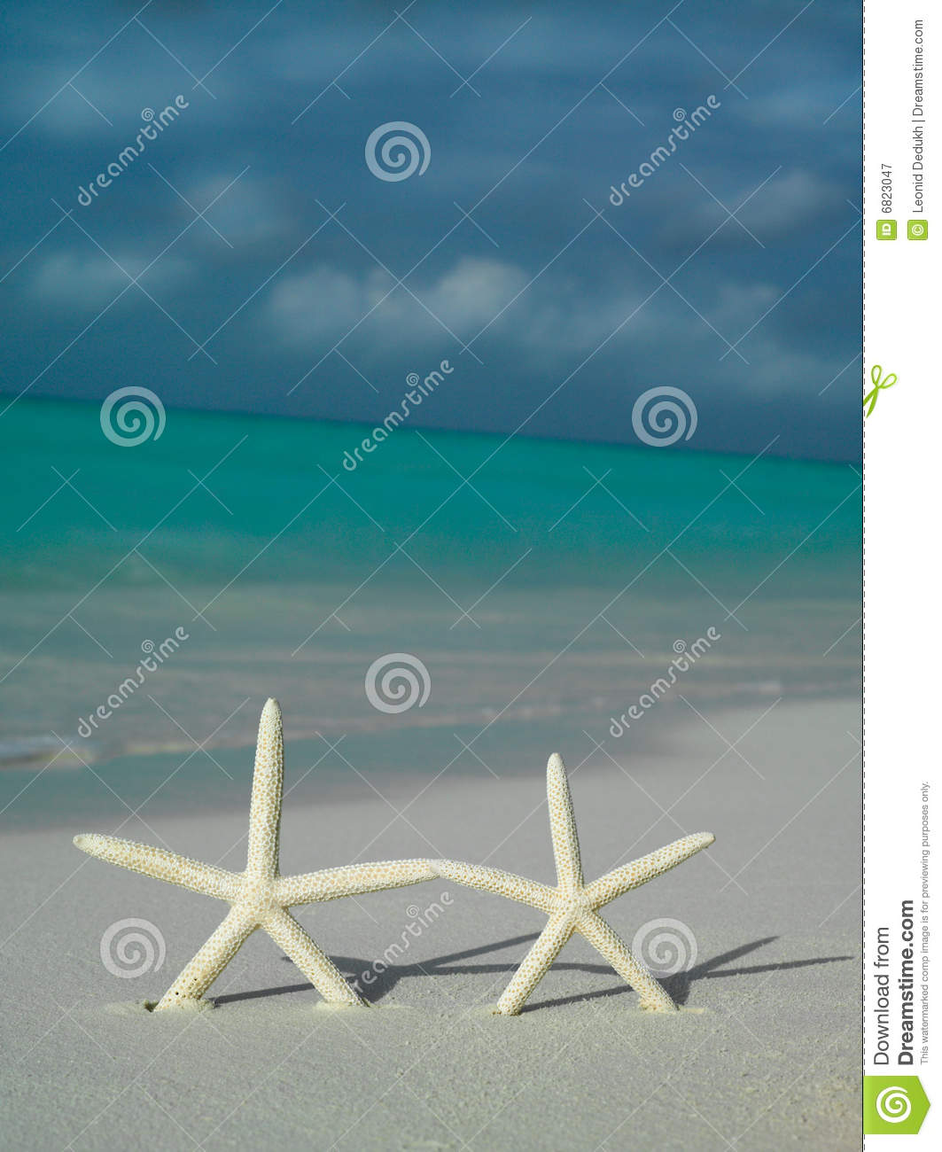 Two starfishs on the beach
