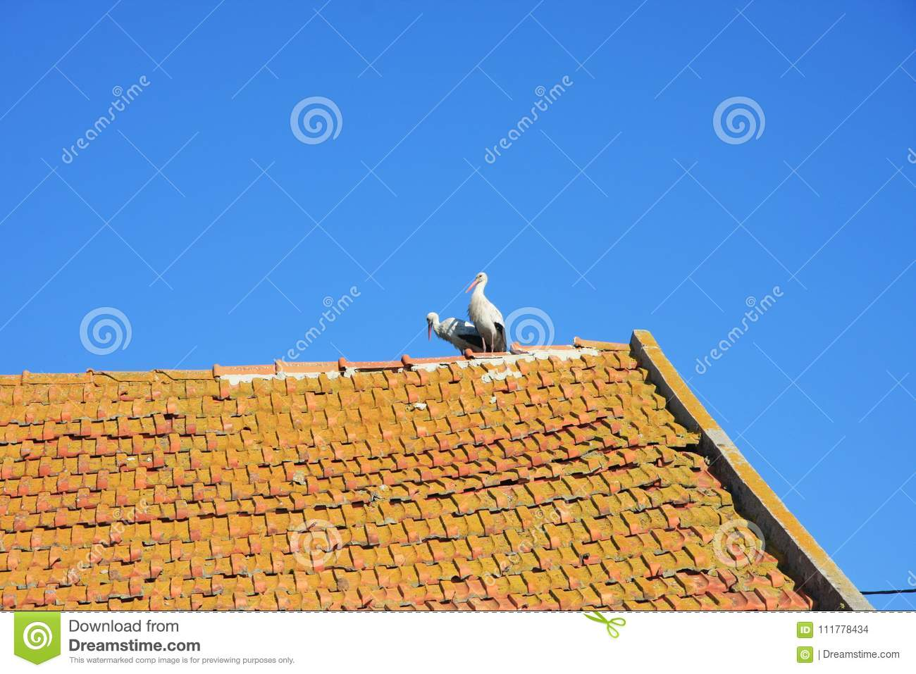 Two storks on tiled roof on background of blue sky.