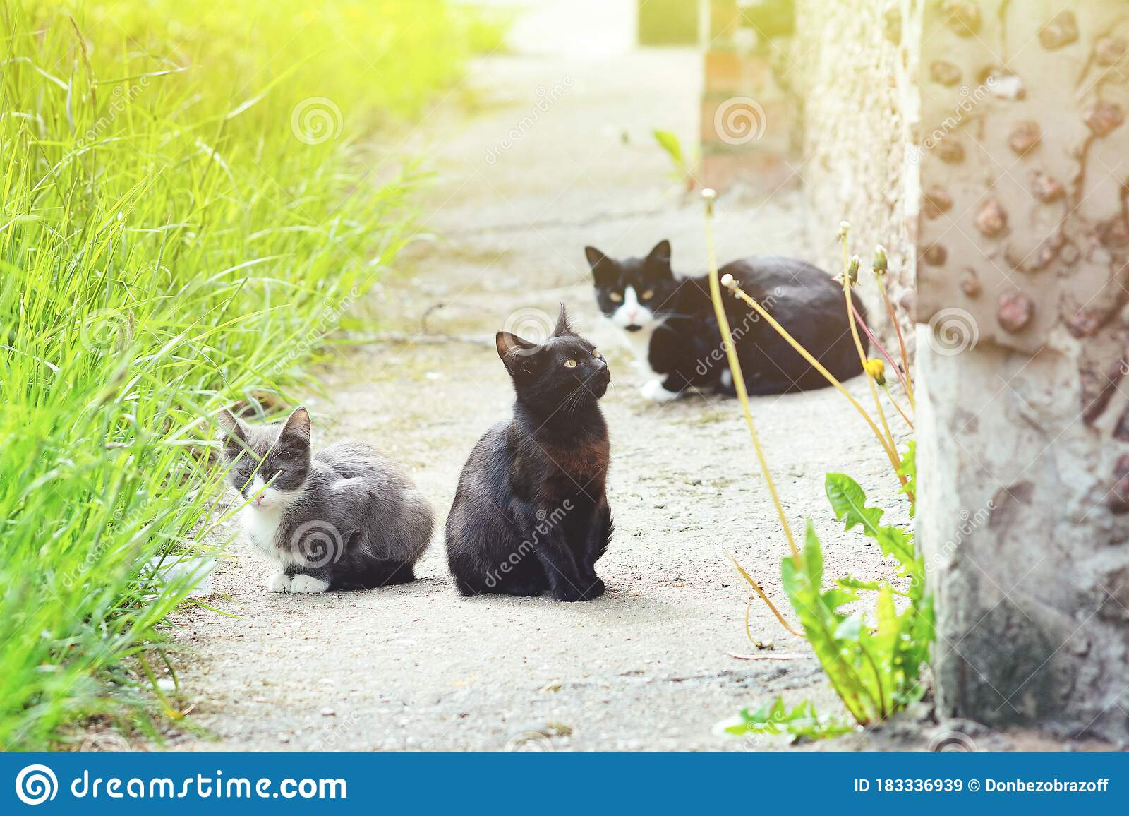 Two Stray Black Cats And One Gray Kitten Are Sitting In ...