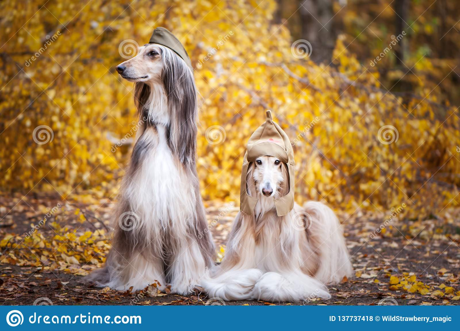Hounds of Autumn