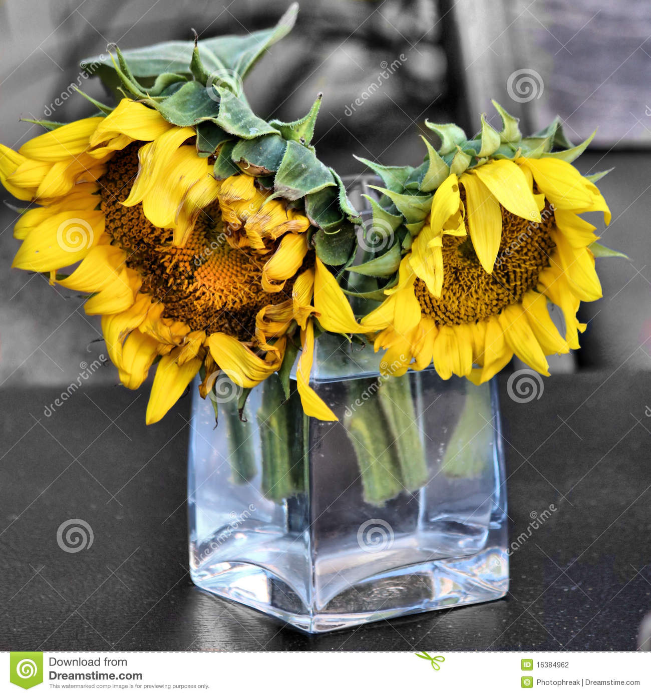 Two Sunflowers In Glass Vase Stock Photography Image 16384962