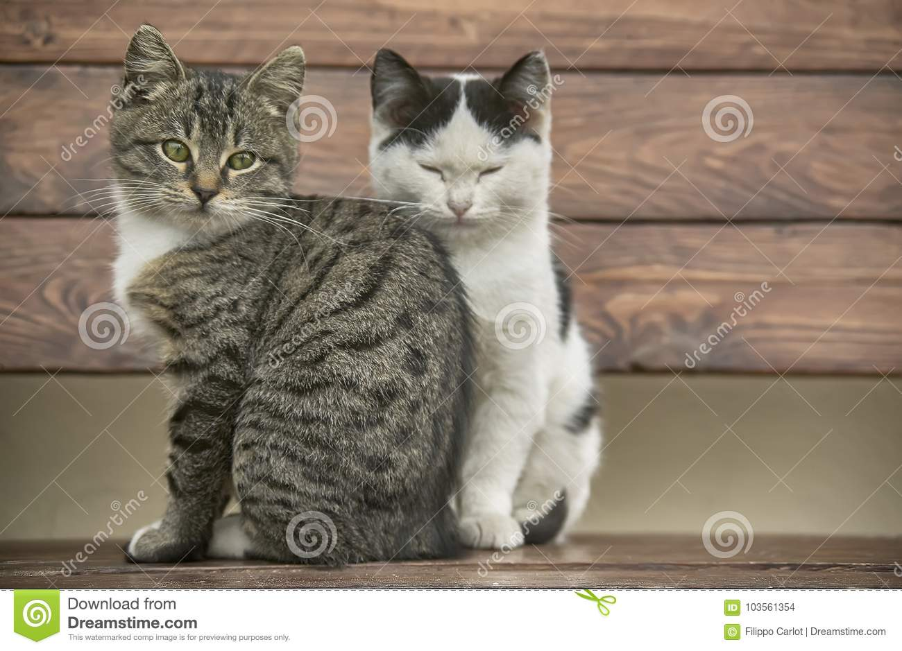 Two sweet kittens sitting stock photo. Image of light - 103561354