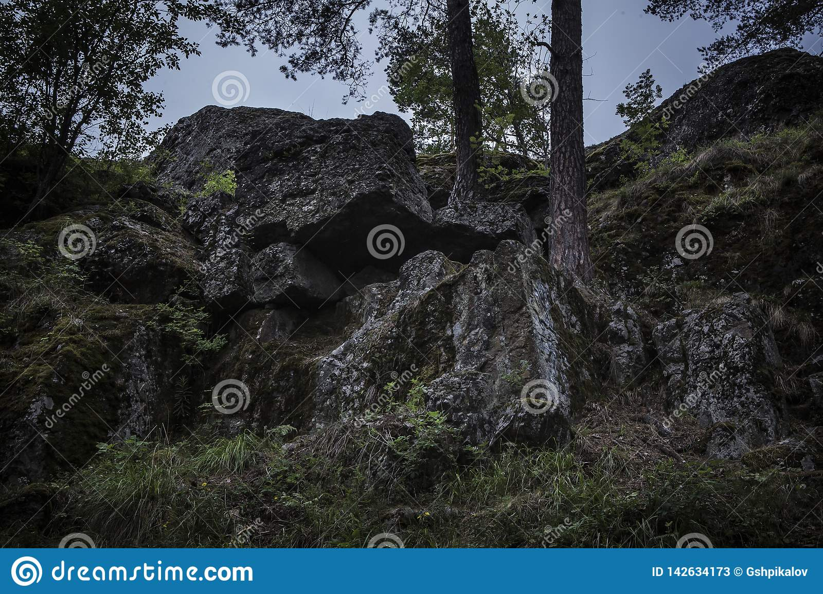 Two trees growing from dark boulders covered in moss