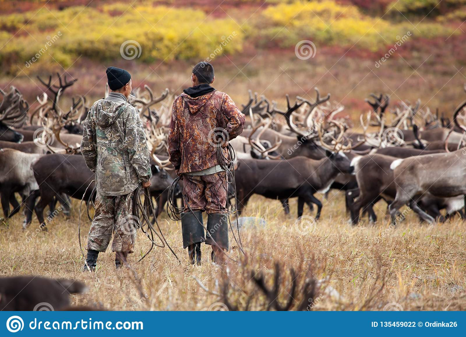 Two unidentifiable Evenk reindeer herders herdsman cowboy stand back and watch the herd of reindeer