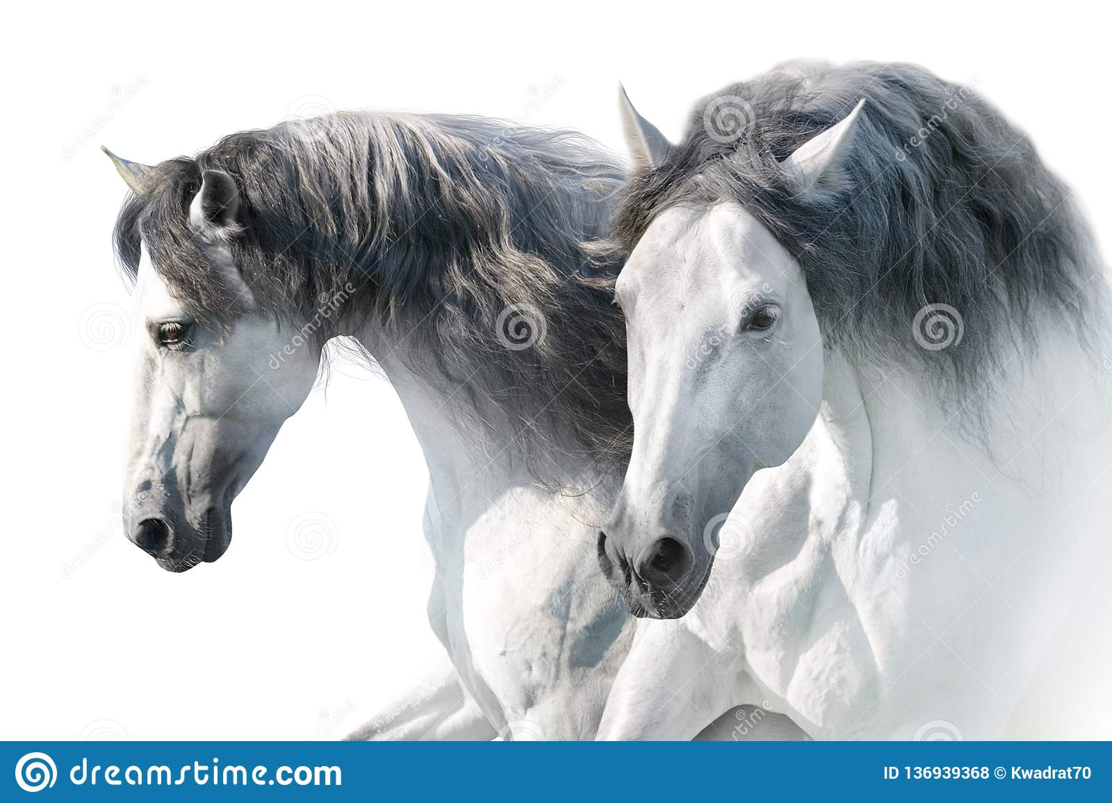 What are the different types of white horses? - Quora | 1155x1600