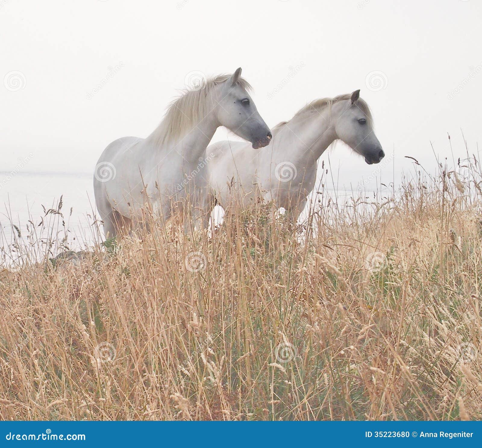 Two White Horses Stock Photo Image Of Love Dreamlike