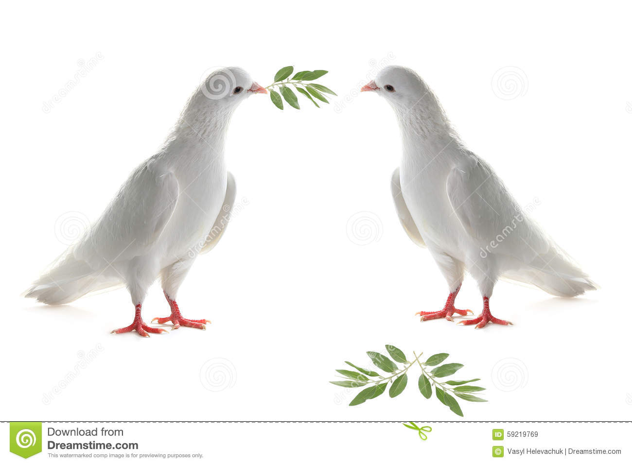 white pigeon guys Snails, moths, and other insects are taken by white-crowned pigeons that saved 194 men of the lost columbidaeorguk conservation of pigeons.