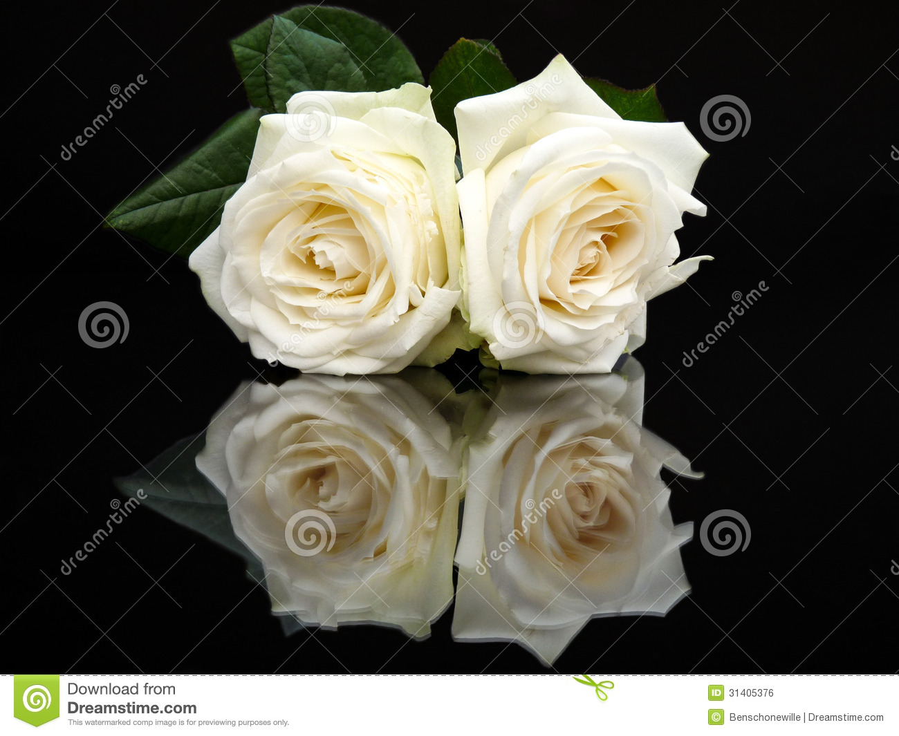 Two White Roses With Mirror Image On Black Stock Photo Image 31405376