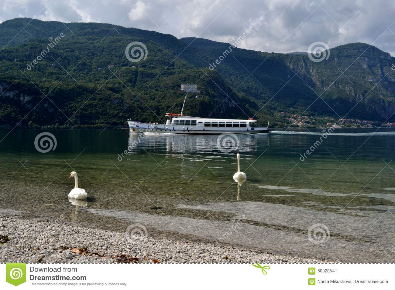 Two White Swans Swimming On Lake Como And A Ferry In Summer Stock Photo Image 60928541