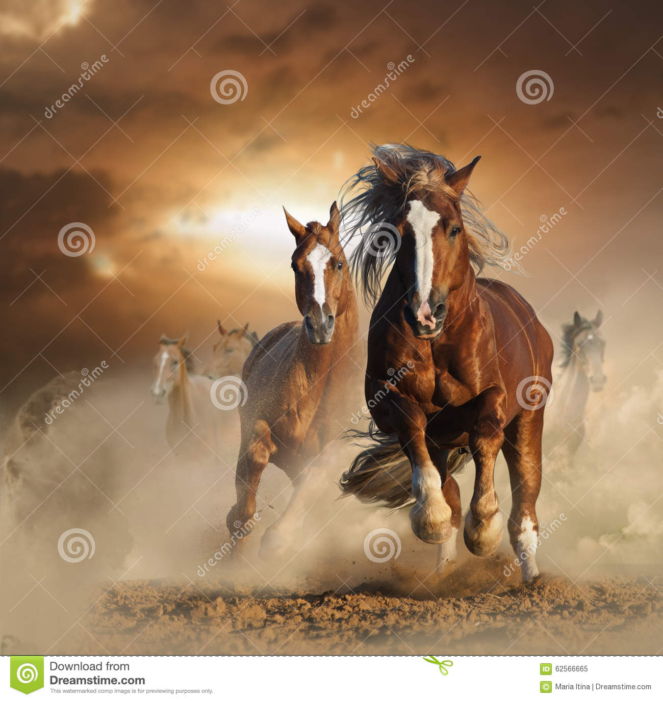 Two wild chestnut horses running together in dust