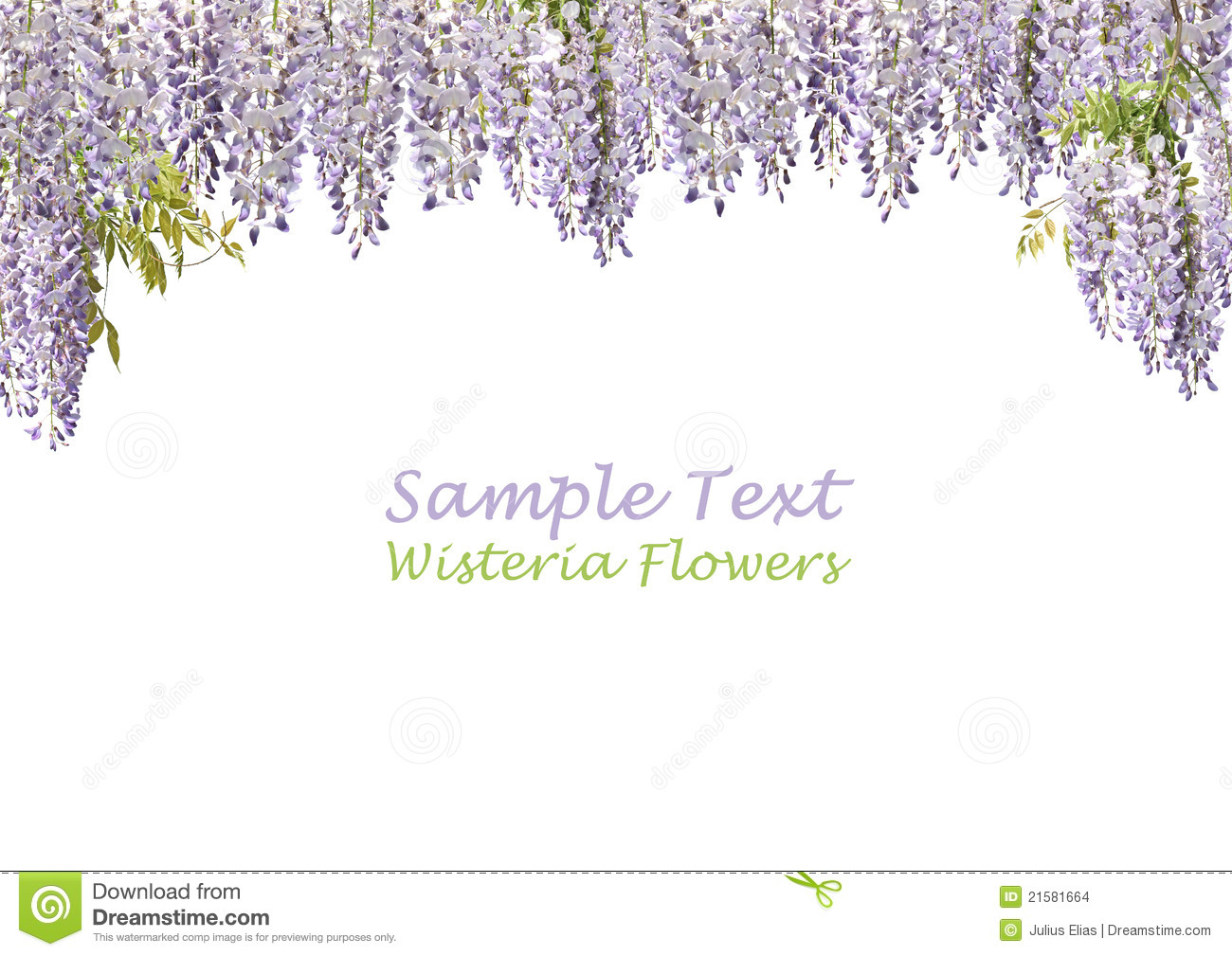 two wisteria flowers stock photo image of decoration