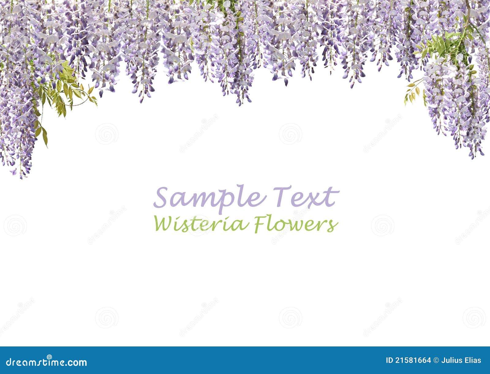 Two Wisteria Flowers