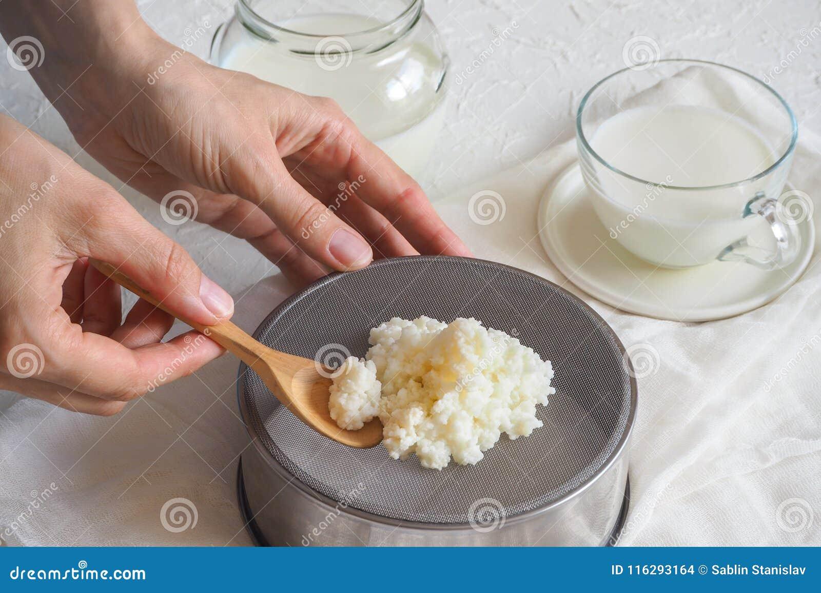 Tybetańczyka mleka pieczarka Organicznie probiotic dojne kefir adra Pojęcie zdrowa dieta fortyfikowanie i system odpornościowy