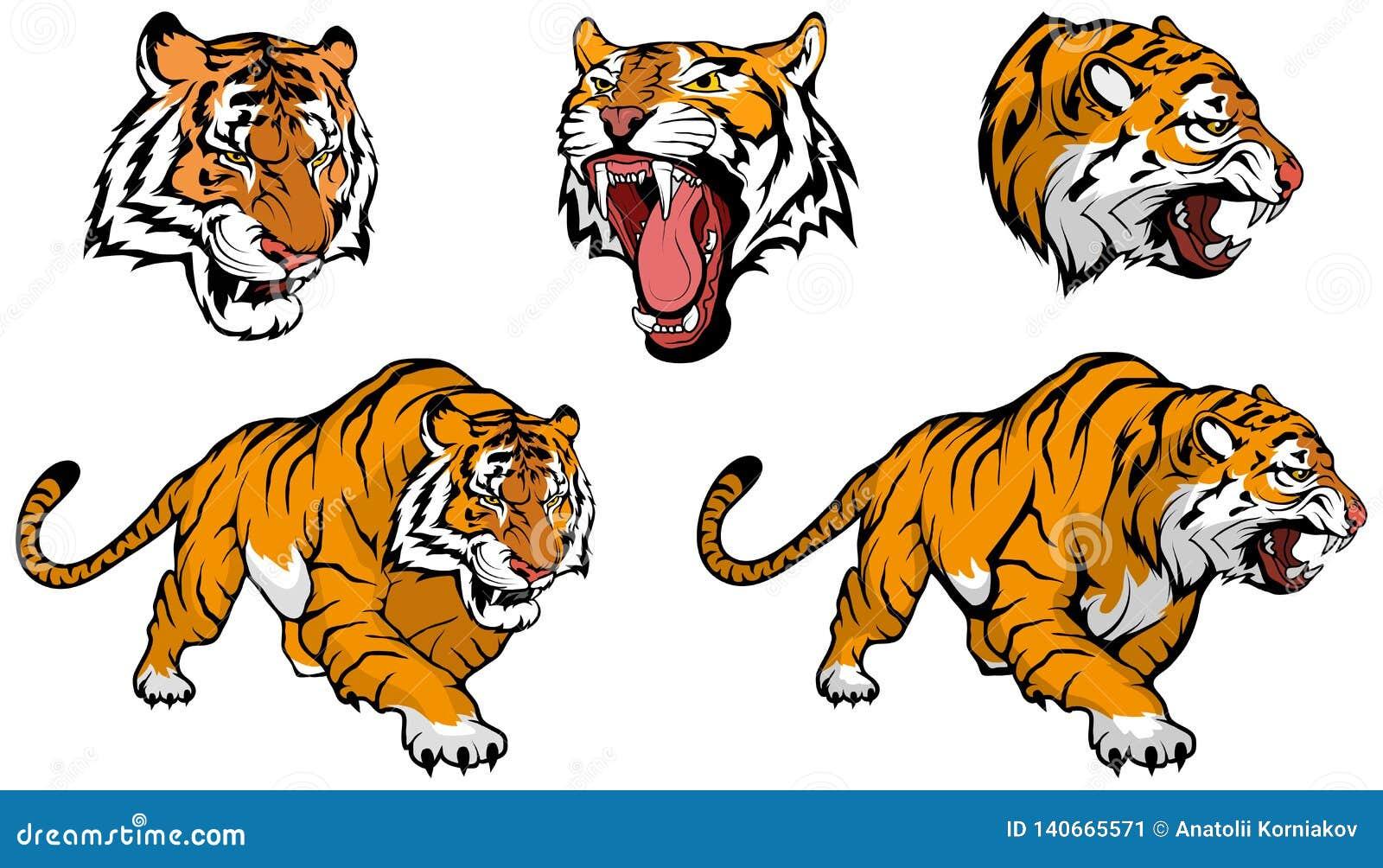 Tygrysi wektoru set, wektorowa grafika