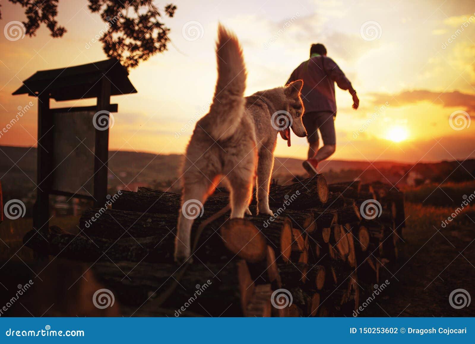Tylni widok mężczyzna outdoors i jego łuskowaty pies przy zmierzchem z kolorowym niebem z obiektywu racą od słońca tła