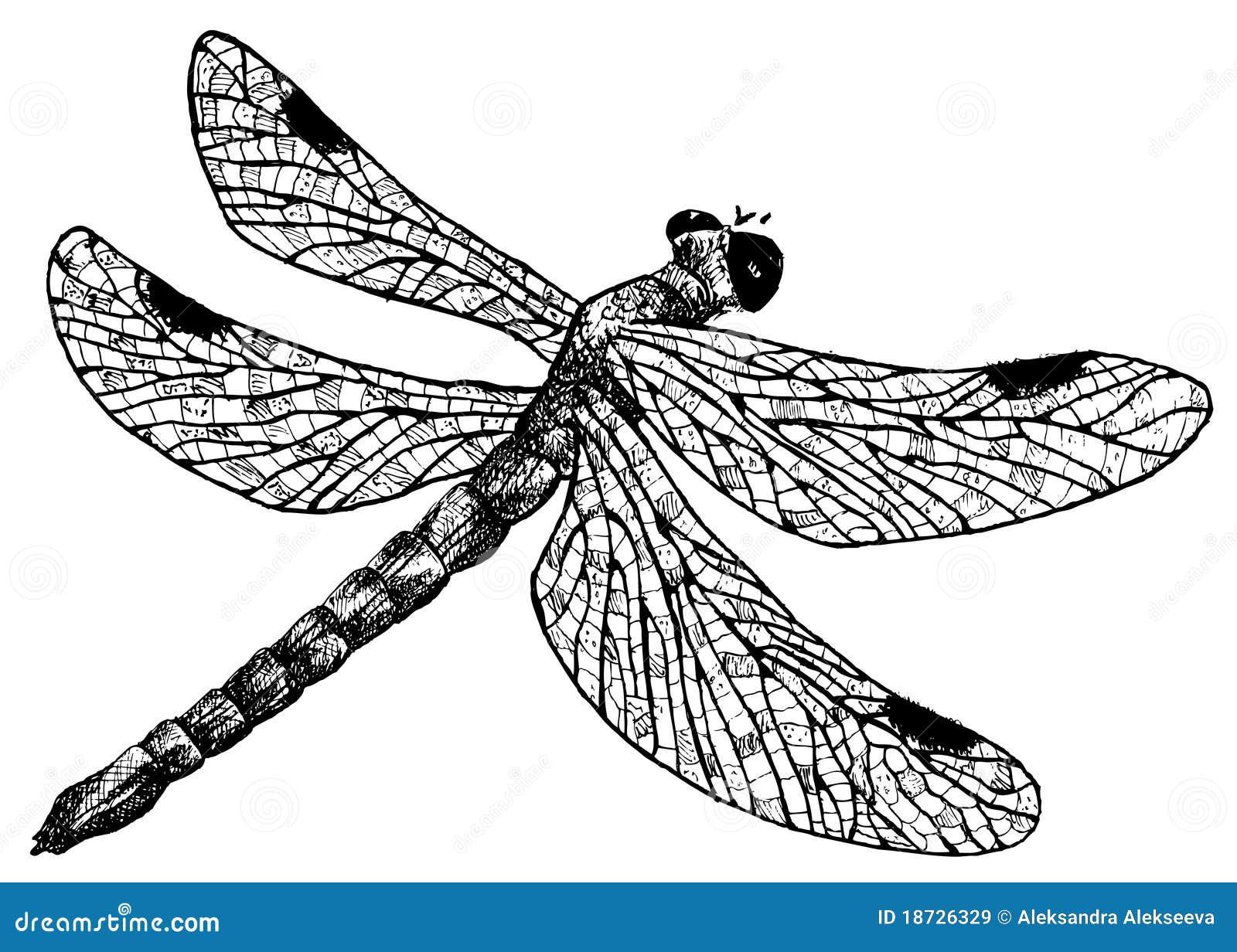 Type d taill de dessin au crayon de libellule - Libellule dessin ...