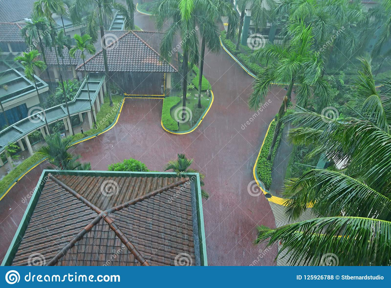 Common heavy downpour rain in tropical country in a beautiful resort with plenty of tall palm trees