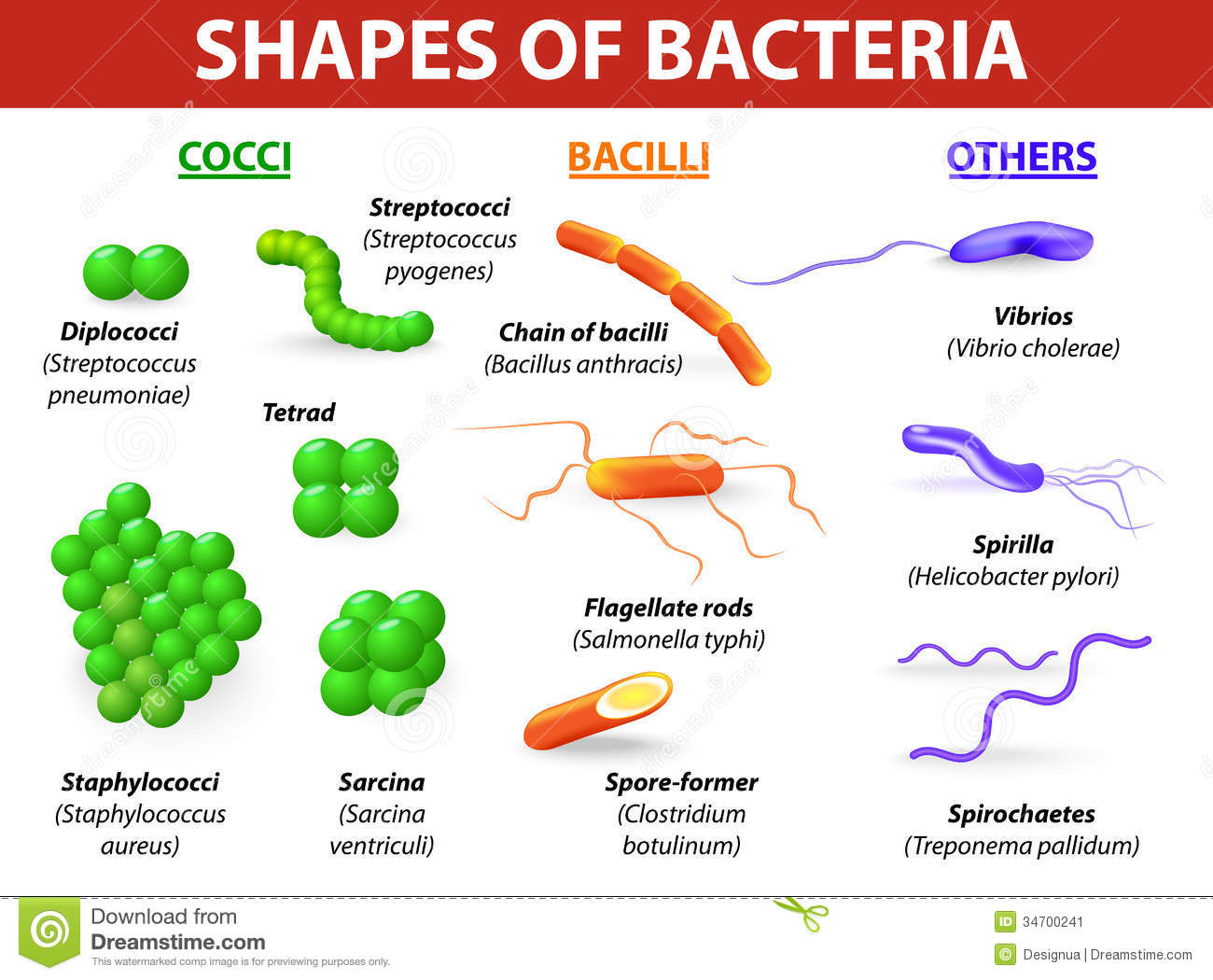 Common bacteria infecting human vector illustrationbacteria are
