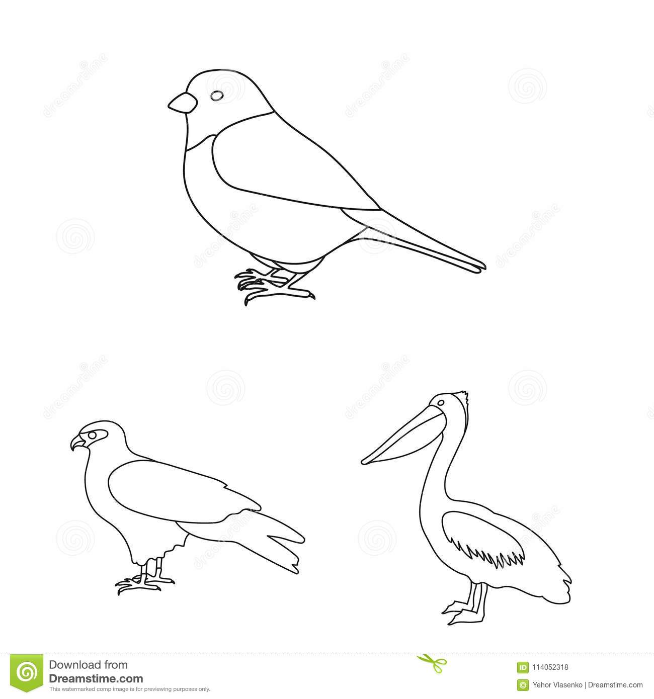 types of birds outline icons in set collection for design home and
