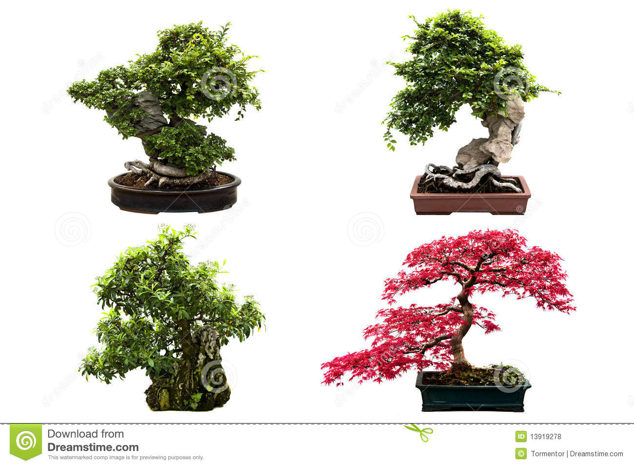 Types Of Bonsai Trees Isolated On White Stock Photo - Image of dwarf