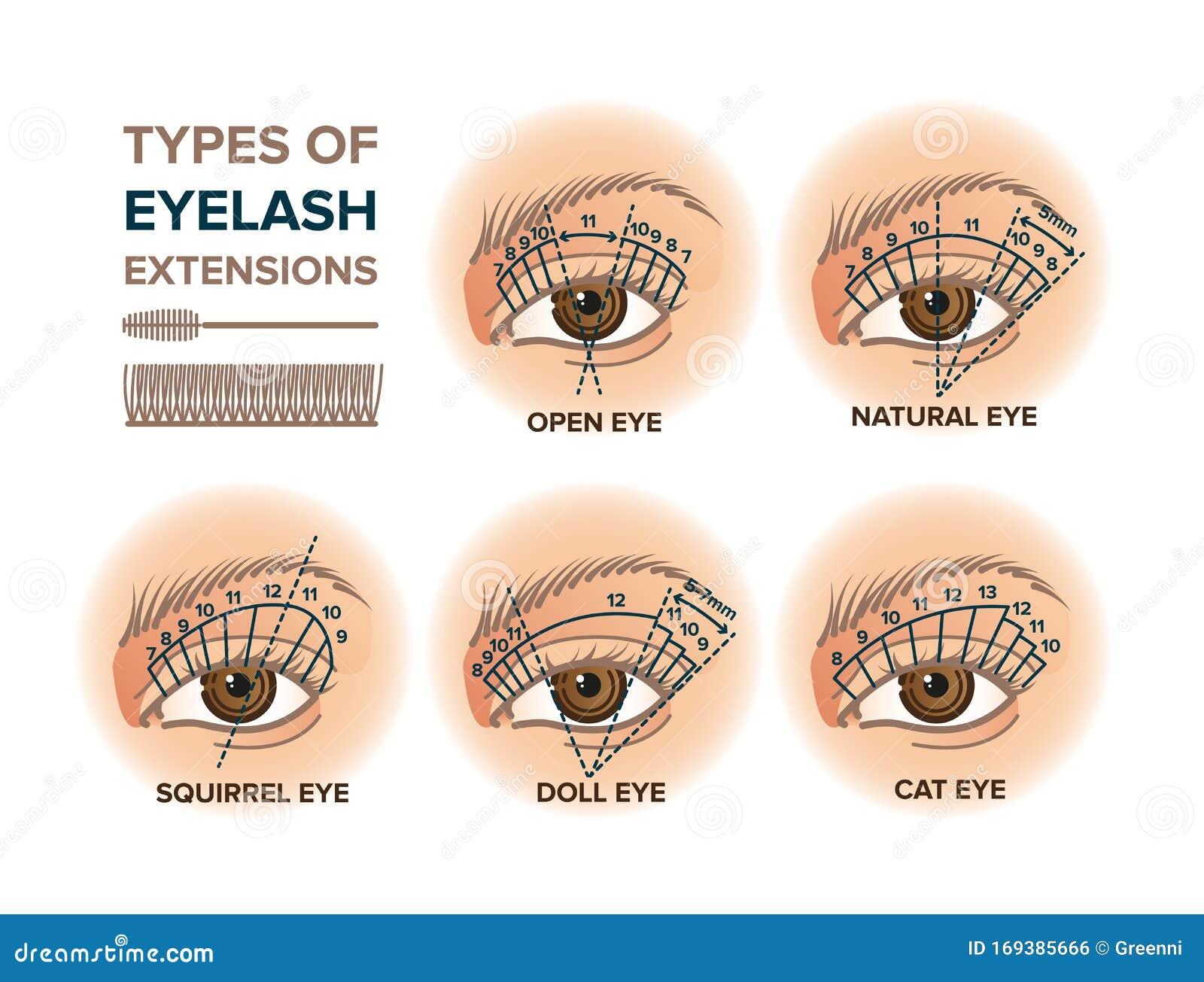 Types Of Eyelash Extensions Illustration Stock Vector Illustration Of Extension Salon 169385666