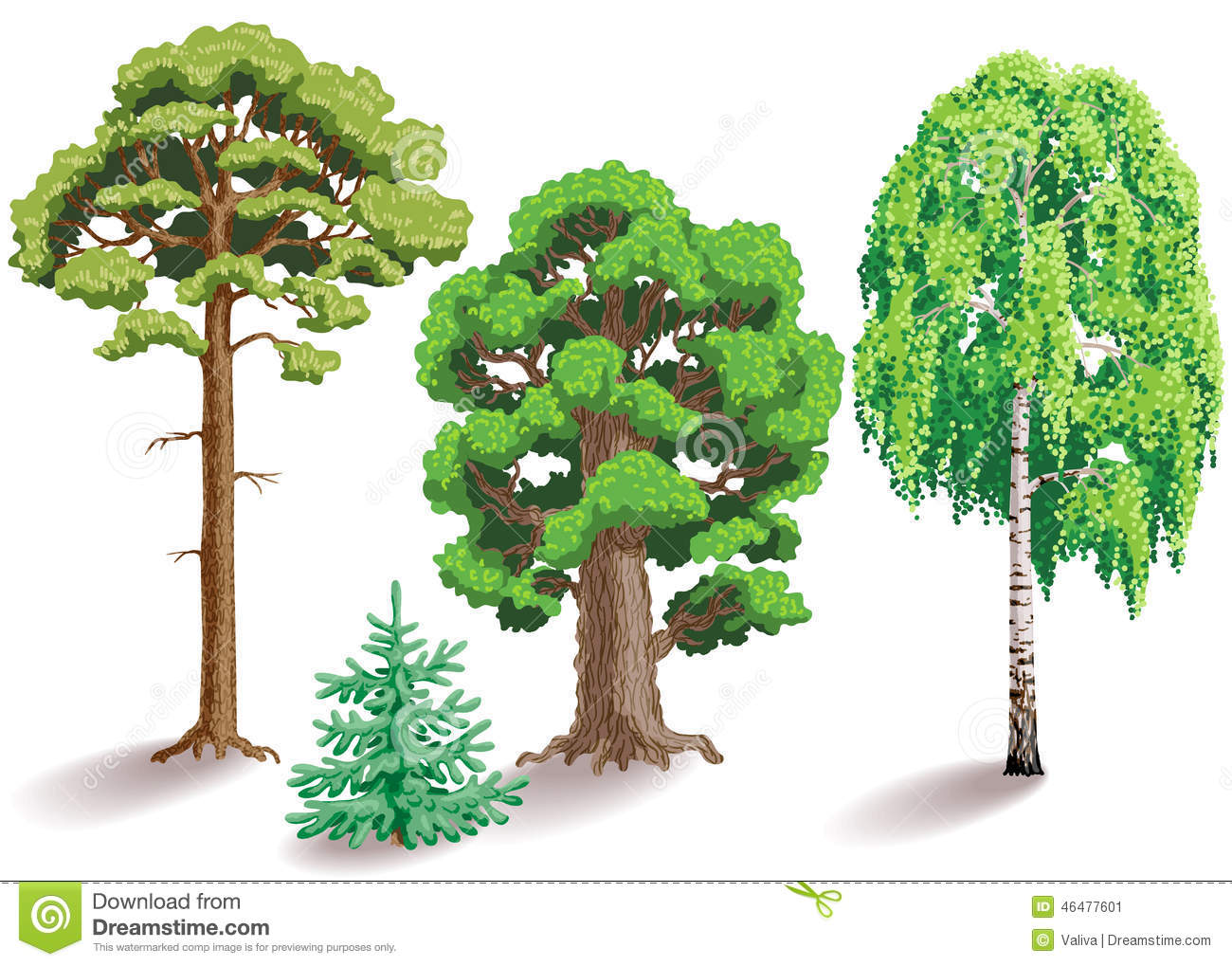 Types of trees oak birch fir pine isolated on white