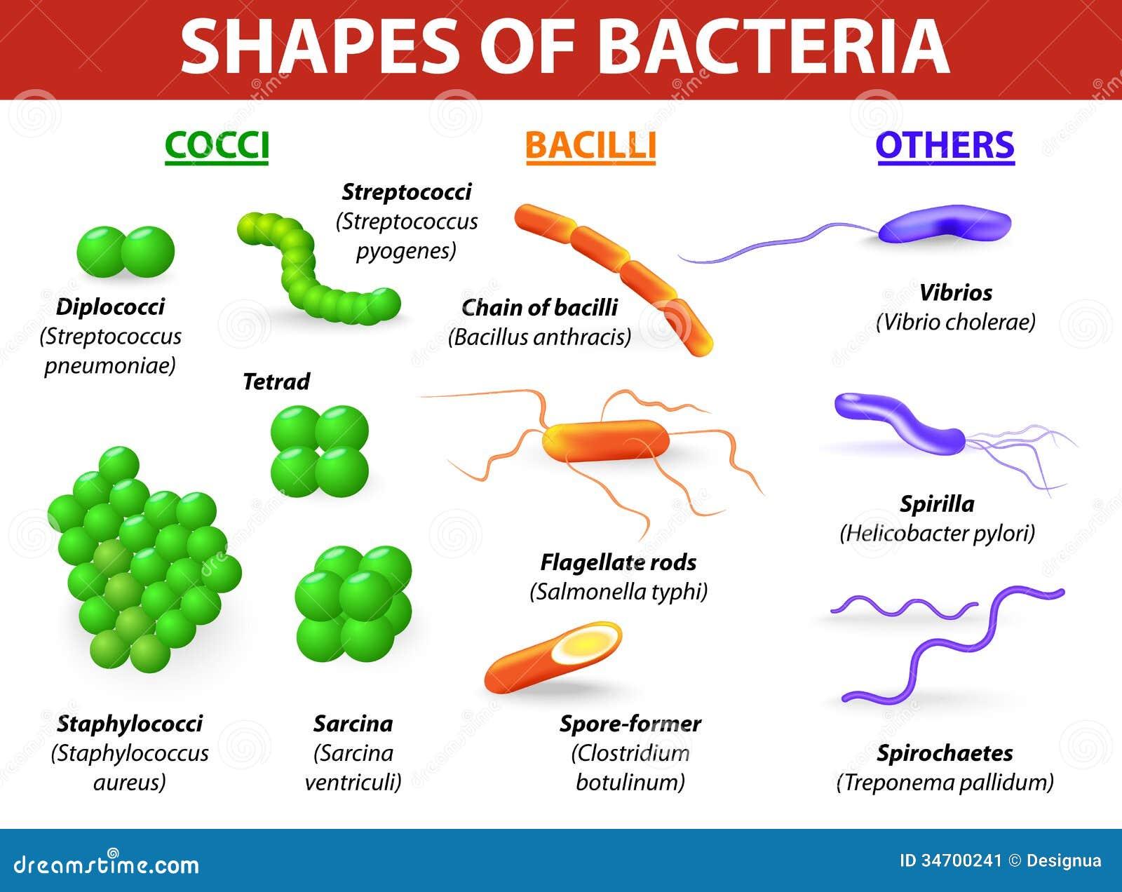 Types van bacteriën