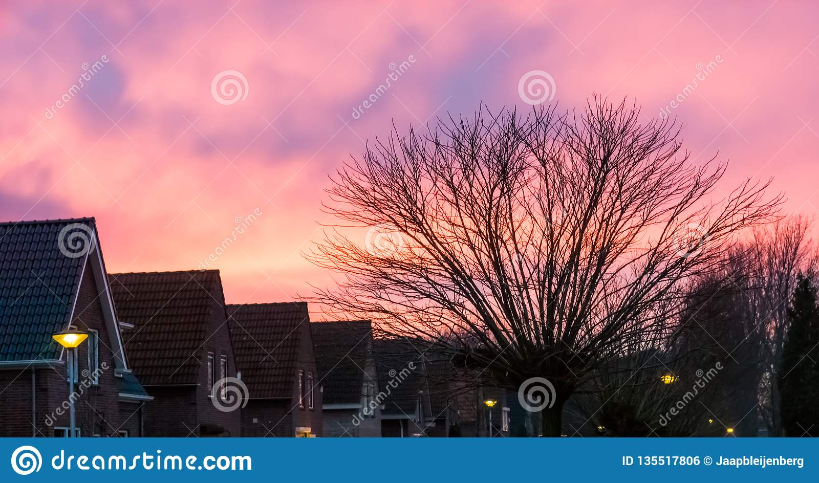 Typical dutch neighborhood with houses and a tree, pink nacreous clouds coloring the sky