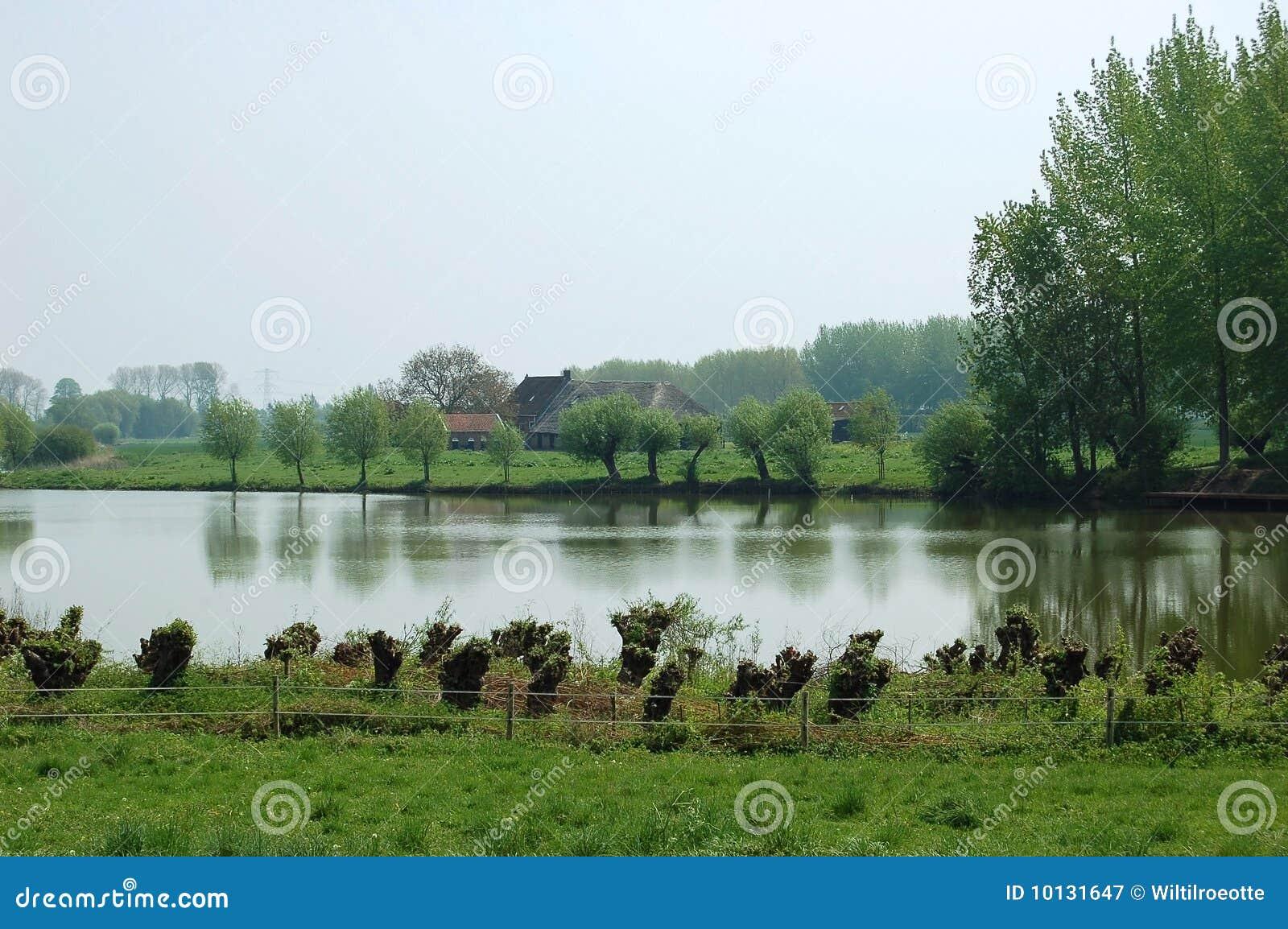Typical wet dutch landscape
