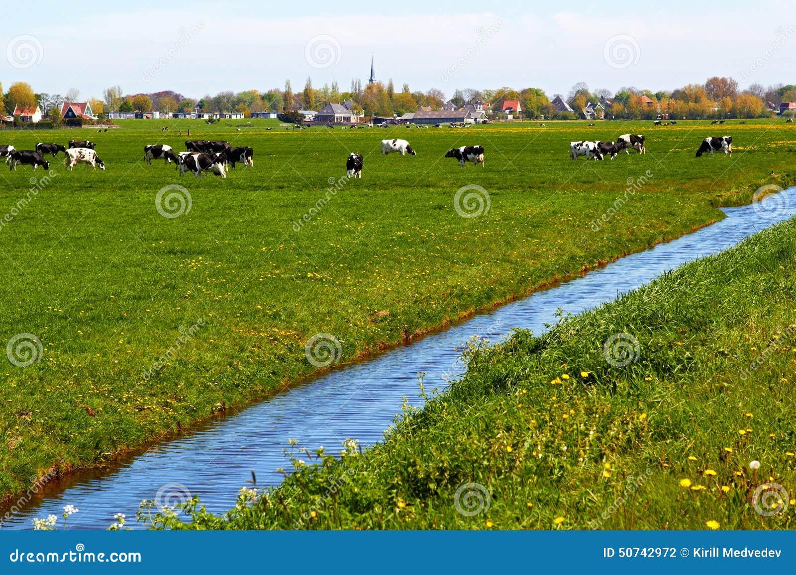 Typische niederländische Landschaft mit Kuhackerland und einem Gutshaus