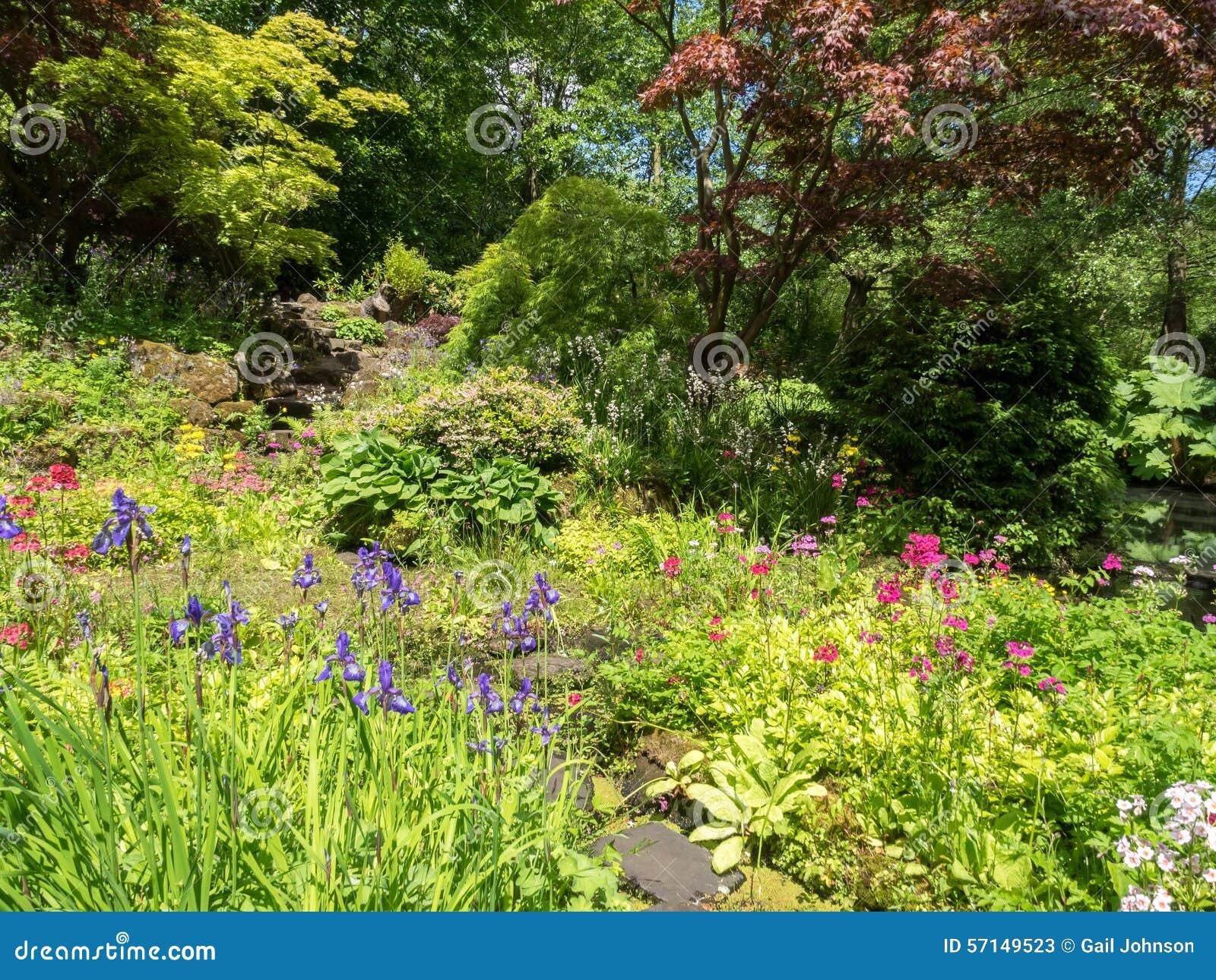 Typischer Englischer Garten Lilien Stockbild Bild Von Lilie