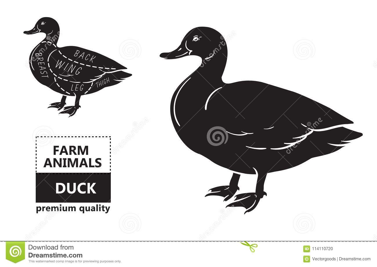 Only Diagram Of Ducks - Residential Electrical Symbols •