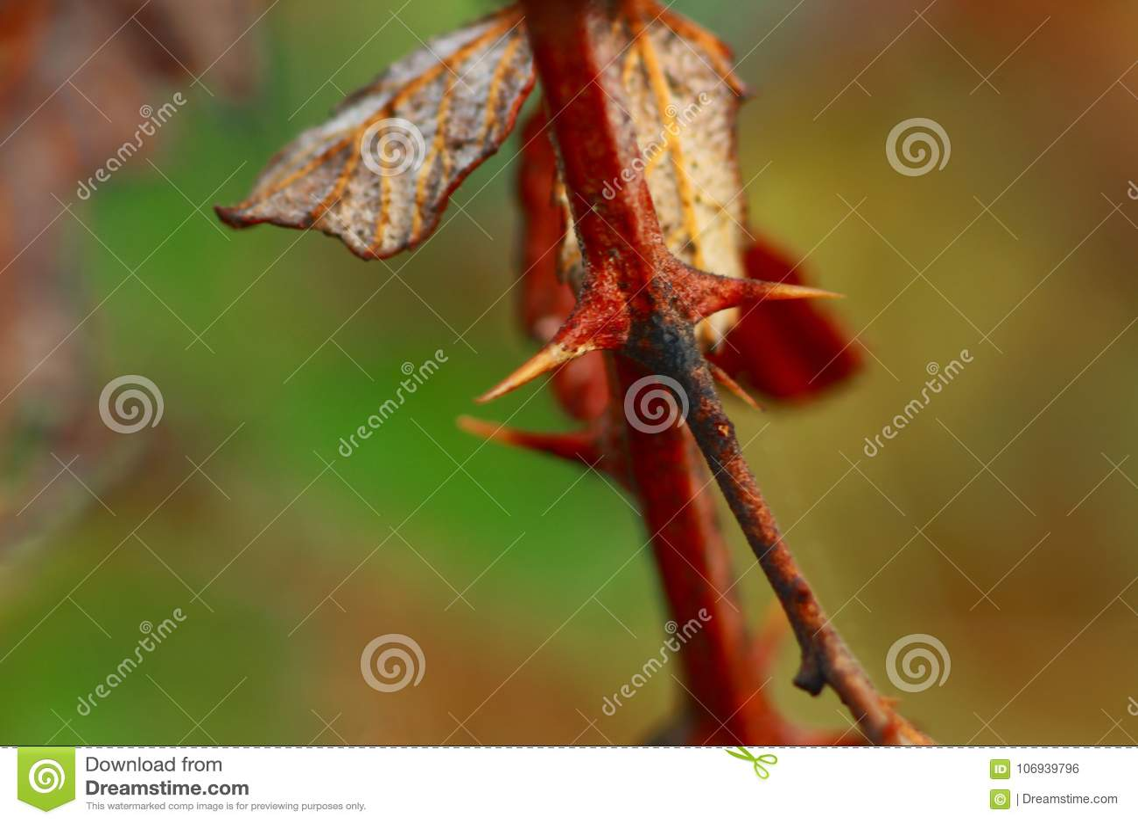 Typowa roślina łatwa dostępność w Śródziemnomorskiej plamie Włoski półwysep