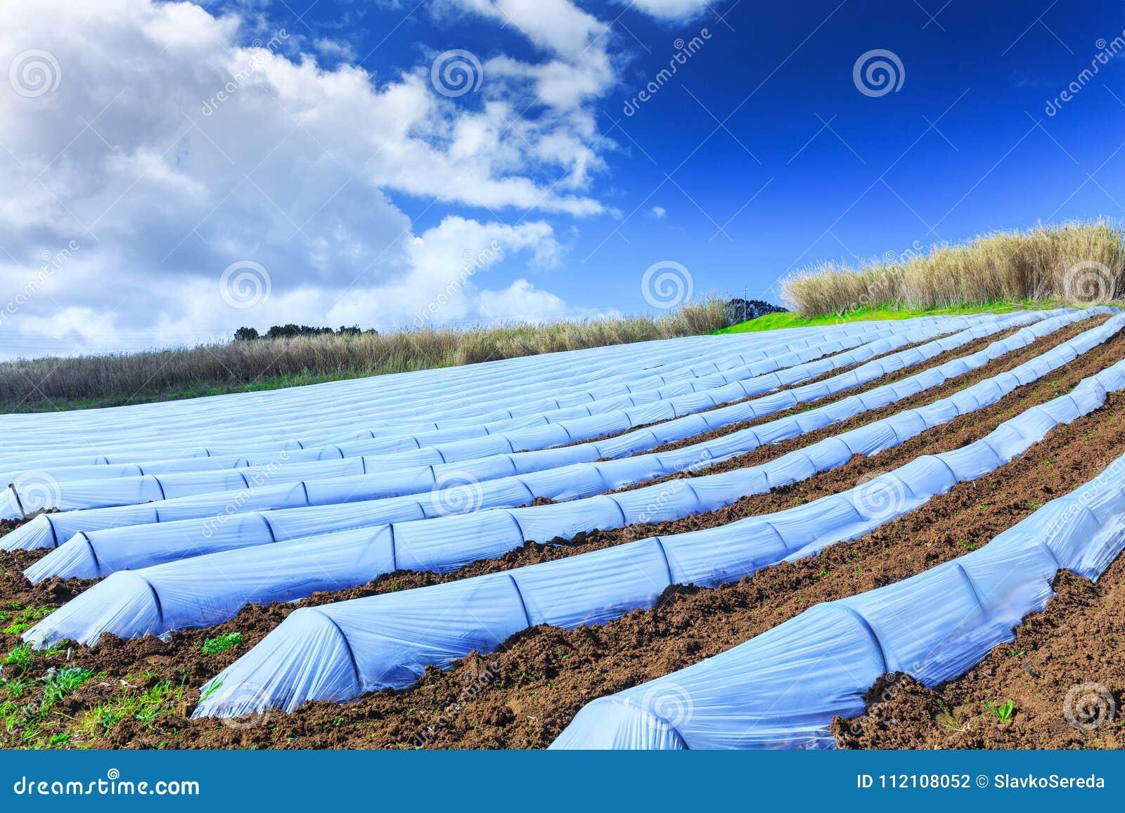 Typowa rolnictwo technologia wczesna wiosny kultywacja
