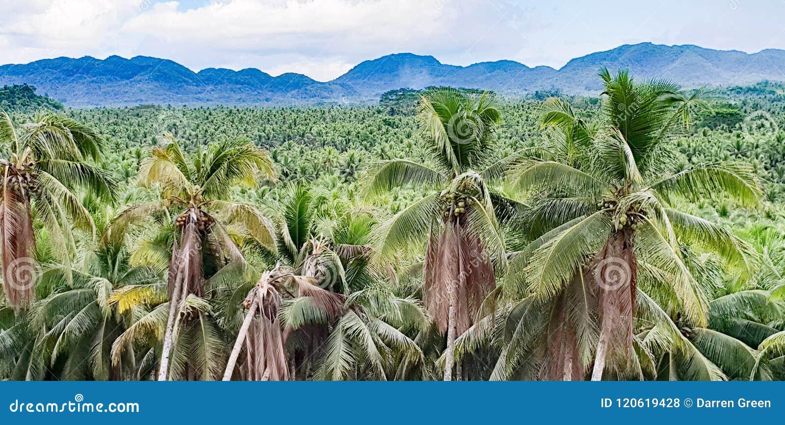 Typowy Filipiny krajobraz Kokosowe palmy i góry
