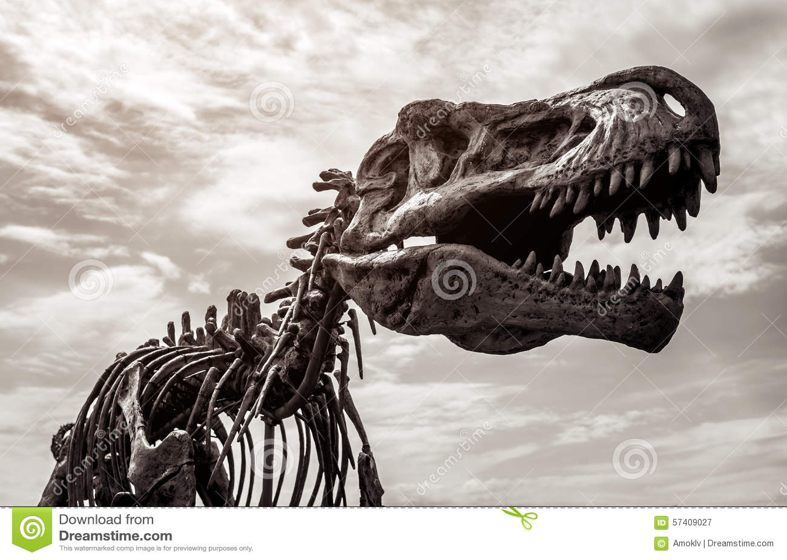 Tyrannosaurus rex skelet