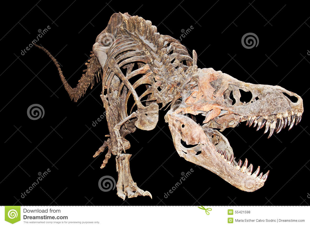 absolute dating dinosaurs The dinosaur figurines of acambaro we may have errors of up to 5-10% in absolute dating we drew dinosaurs with conical dermal spines and antonio pointed.