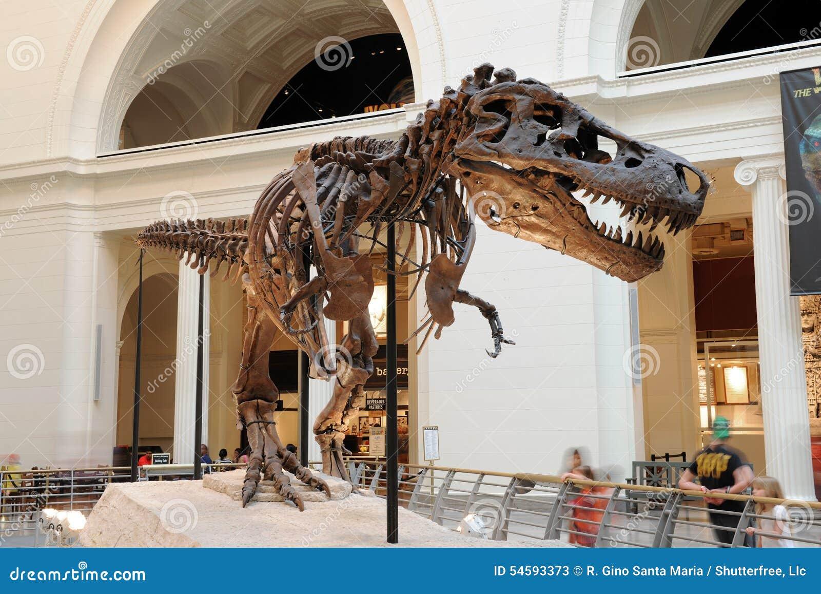 Rex Museo