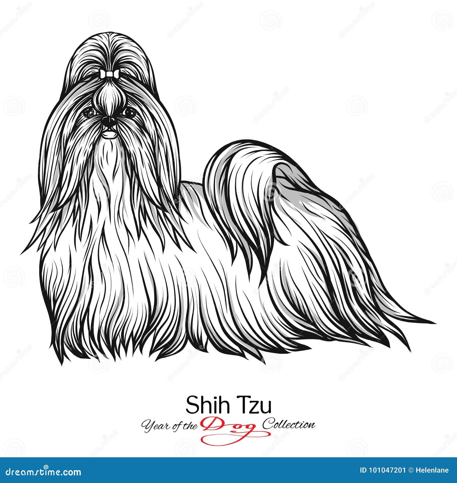 Tzu De Shih Dibujo Gráfico Blanco Y Negro De Un Perro