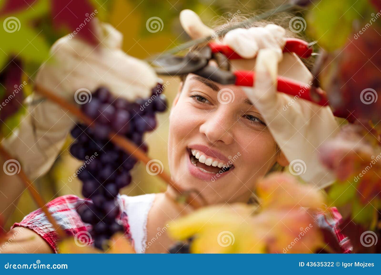 Uśmiechnięta śliczna kobieta zbiera winogrona