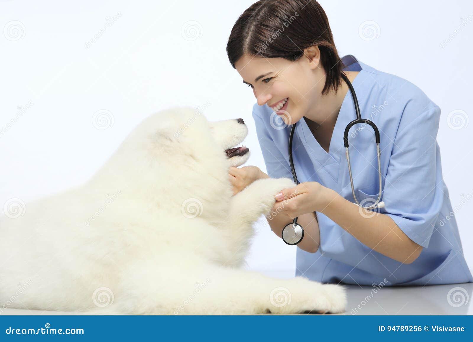 Uśmiechnięty weterynarz egzamininuje psią łapę na stole w weterynarz klinice
