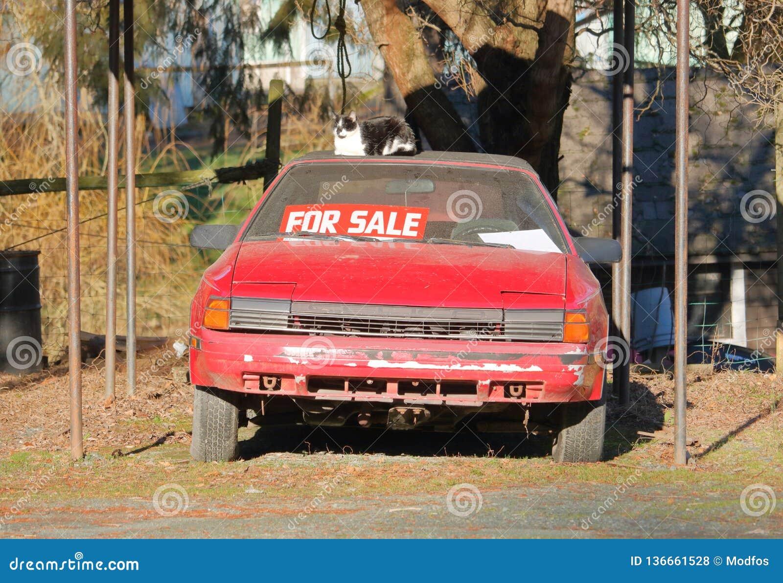Używać sporta samochód Dla sprzedaży i zwierzęcia domowego
