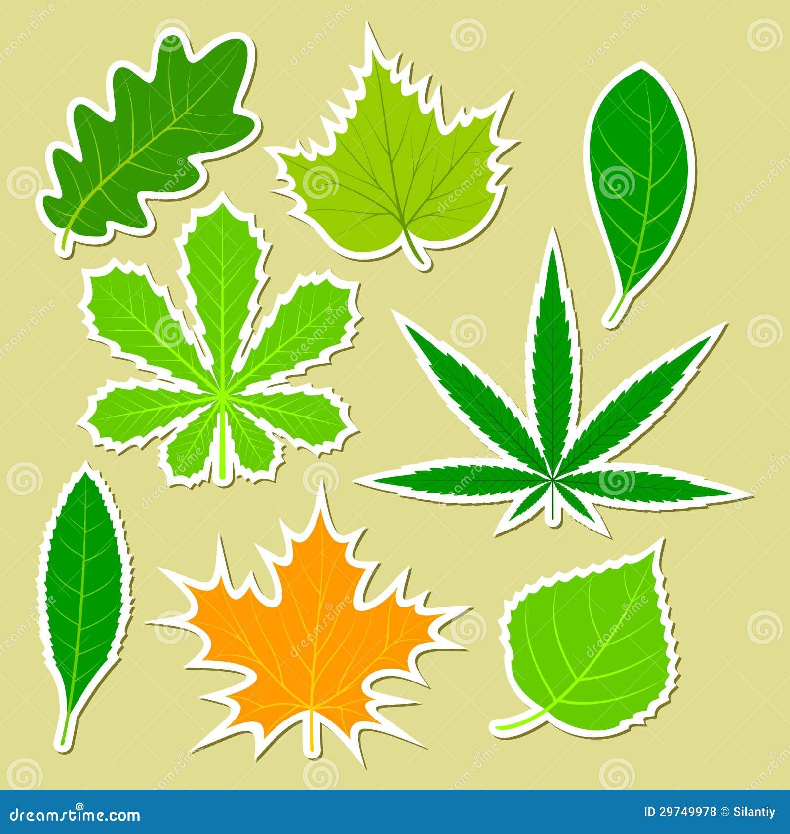 这个图片上是什么植物?叶子有点像散尾葵,但不是.图片
