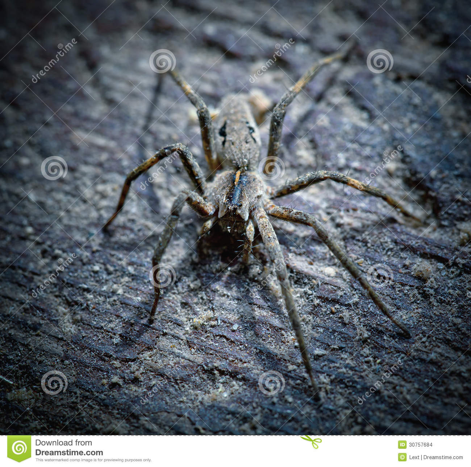 梦见大蜘蛛追我