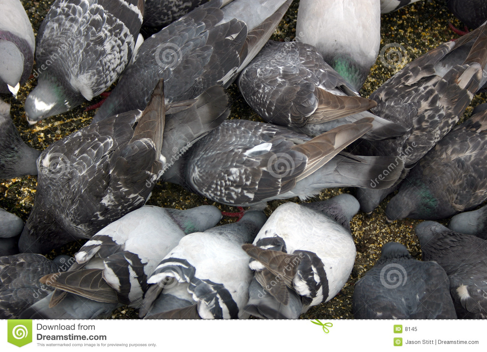 Download Uccelli immagine stock. Immagine di animali, uccelli, fame - 8145
